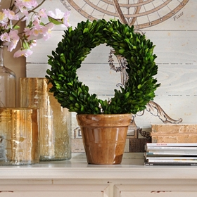 Boxwood Wreath Preserved Topiary, 13 in.