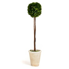 Boxwood Single Ball Preserved Topiary, 29 in.