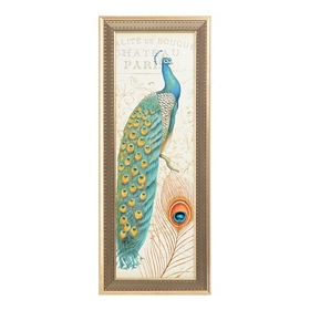 Majestic Peacock I Framed Art Print