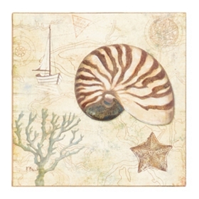 Discovery Shells I Canvas Art Print
