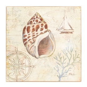 Discovery Shells III Canvas Art Print