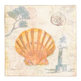Discovery Shells IV Canvas Art Print