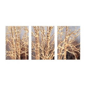Winter Birch Canvas Art, Set of 3