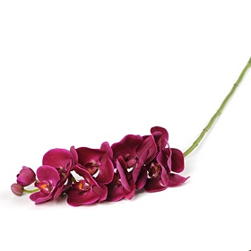 Fuchsia Orchid Stem, 35 in.