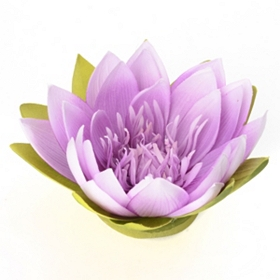 Violet Floating Lotus Blossom